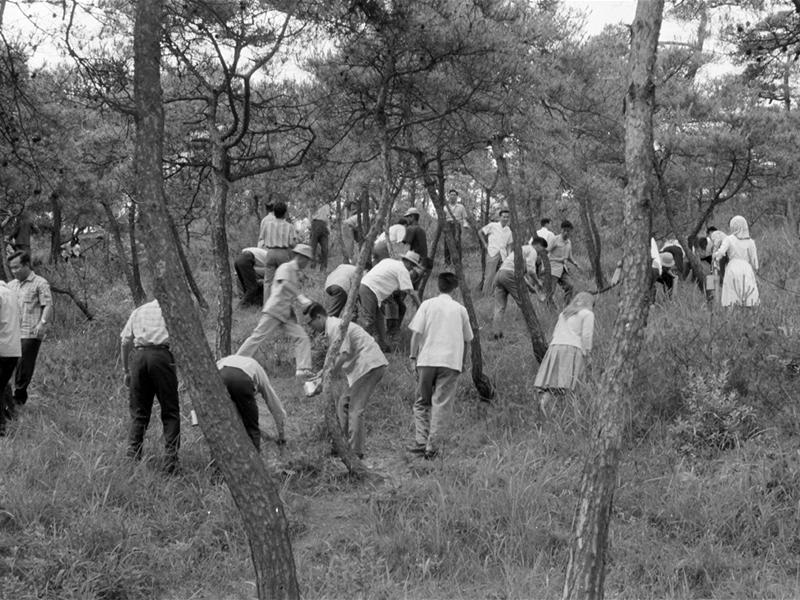 남산 송충이 잡기 (`64년 6월)1