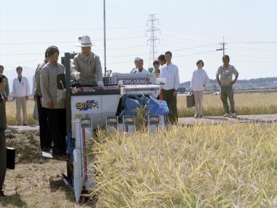 김영삼 대통령 벼베기 행사 참석