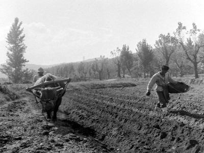 농촌밭갈이및씨뿌리기